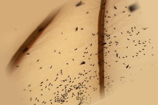 Скопление мошек на поверхности