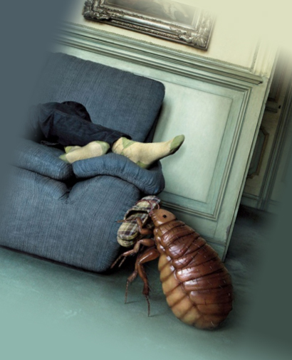 Блохи в квартире