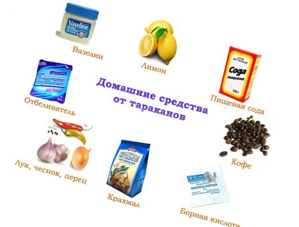 домашние средства от паразитов человека