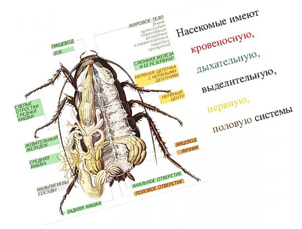 То, из чего состоит таракан