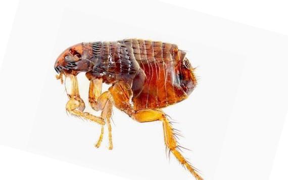передаются ли паразиты от человека человеку