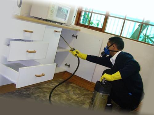 Обработка кухонного гарнитура от клопов