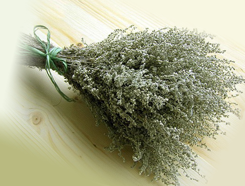 Веник из травы полыни