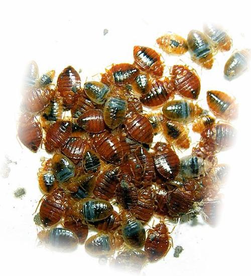 Когда препарат начинает работать, можно наблюдать мертвых насекомых