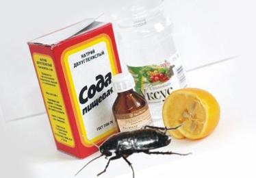 Народные средства против тараканов