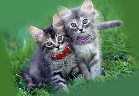 Маленькие котята с ошейниками от блох