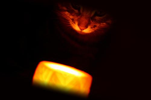 Заговор от блох на кота: свеча и кот