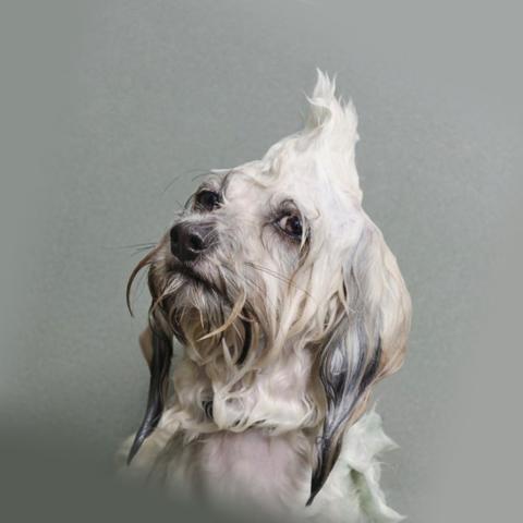 Мокрый пес