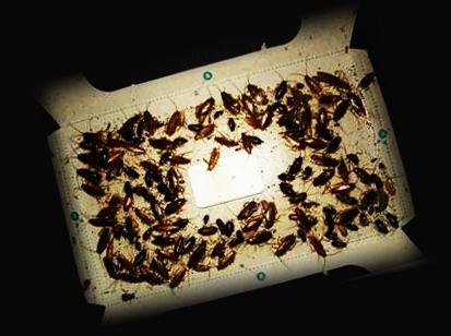 Клеевая ловушка от тараканов