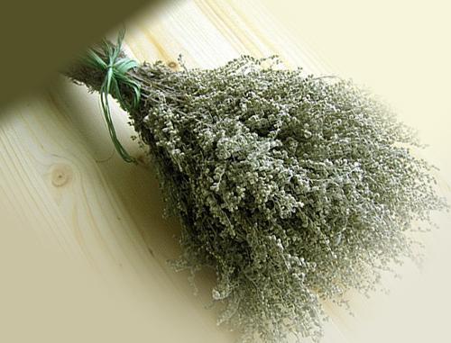 Растение полынь как средство от блох