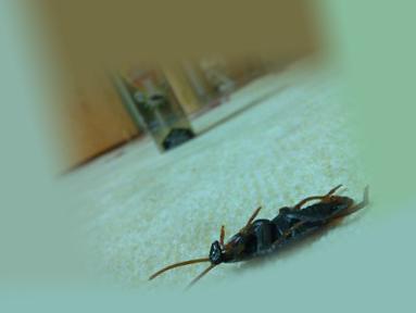Мертвый таракан после применения рейда