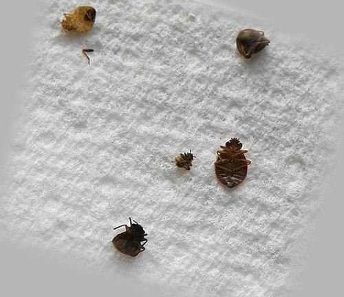 Погибшее насекомое