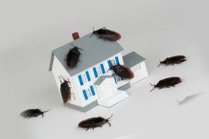 Ловушка от тараканов