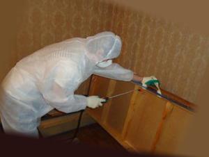 Профессиональная обработка дивана от паразитов