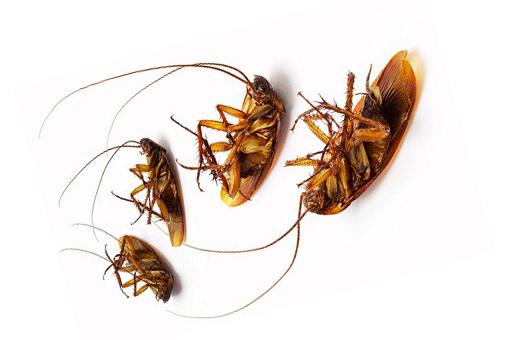 4 таракана на спине