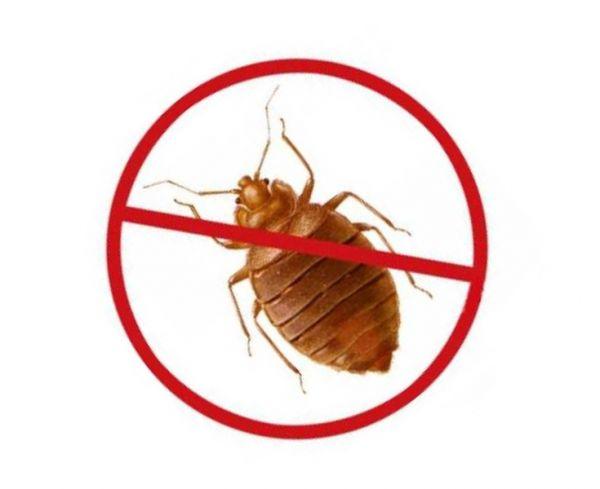 каким паразитом может заразиться человек если съест