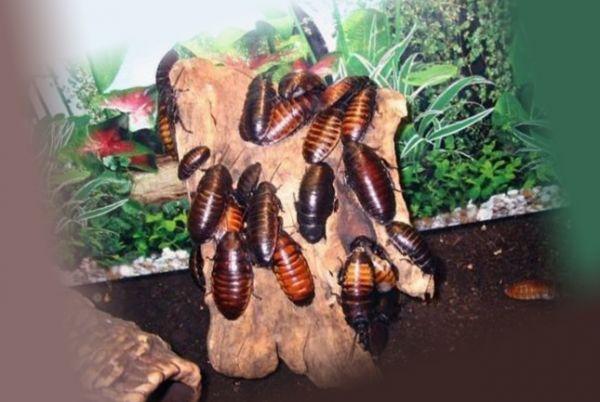Стадо тараканов