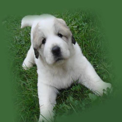 Белый пес на лужайке
