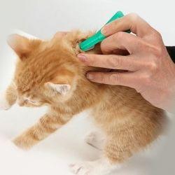 Как убрать блохи у котенка так, чтобы не причинить ему вреда?