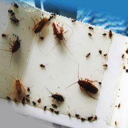 Травля тараканов в домашних условиях, средства, отзывы