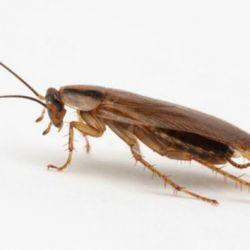 Избавляемся от тараканов навсегда с помощью молитвы