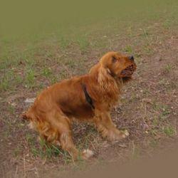 Борьба с блохами домашних животных при помощи капель адвантикс