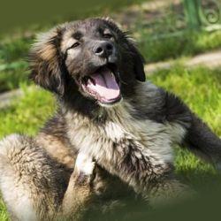 Применение ошейника против блох и клещей для собак