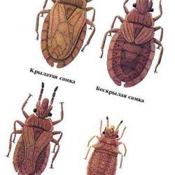 средства от постельных паразитов